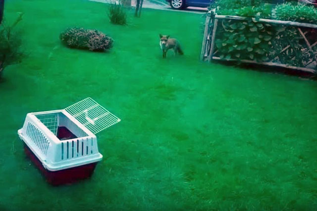 puppy rilasciato