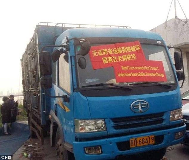 Camion con festival di cani destinati Yulin