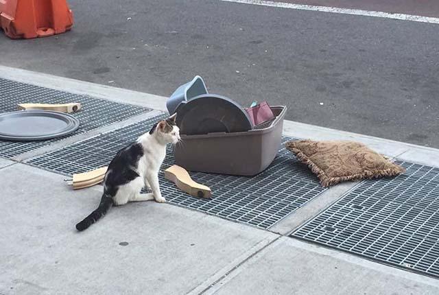 Cat è stato abbandonato a New York