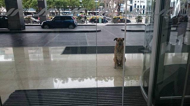 Azafata-alemana-adopta-a-un-perro-sin-hogar-que-la-esperaba-despues-de-cada-vuelo