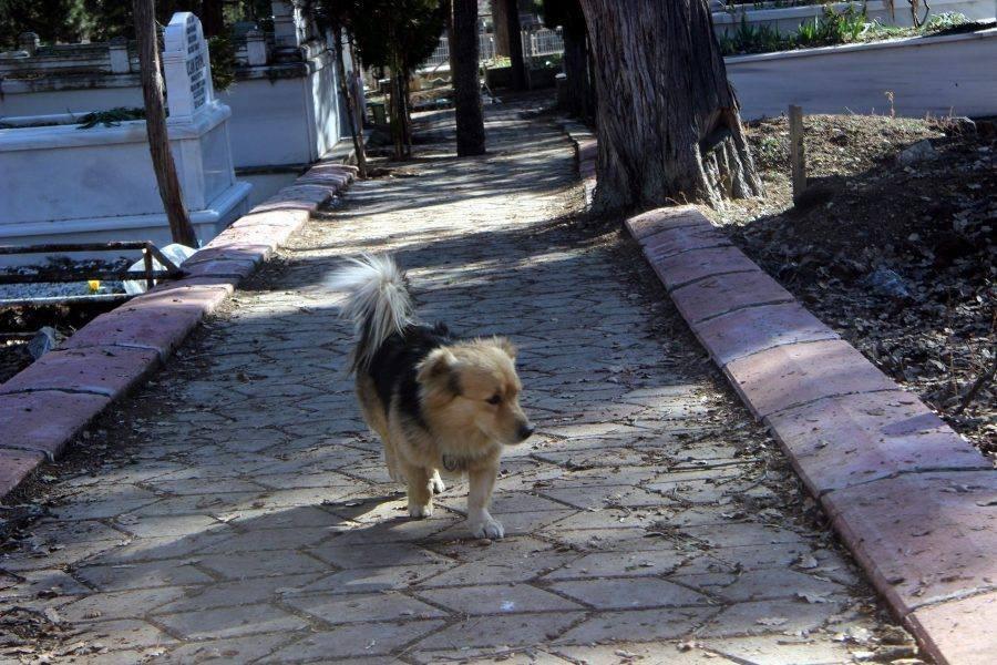 Perro visita la tumba de su mejor amigo