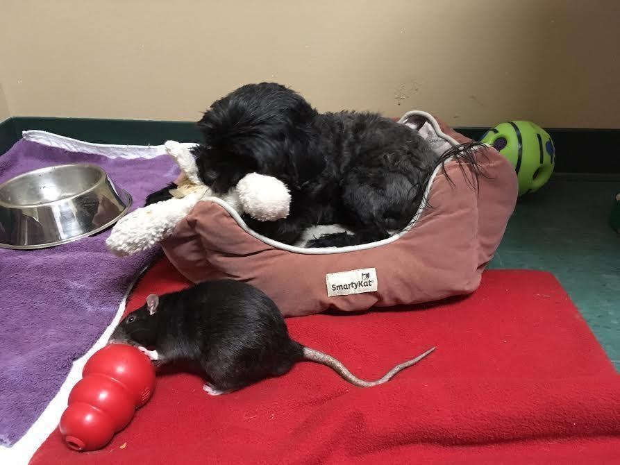 Rata y perro