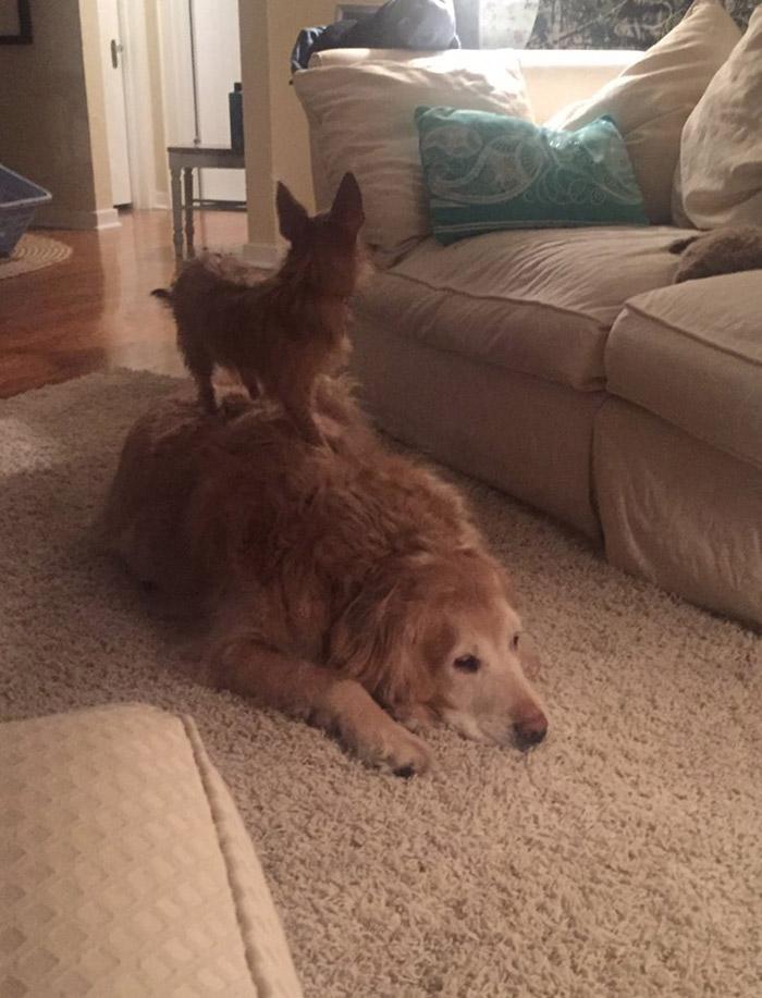 Bella y Hank se complementan a la perfección