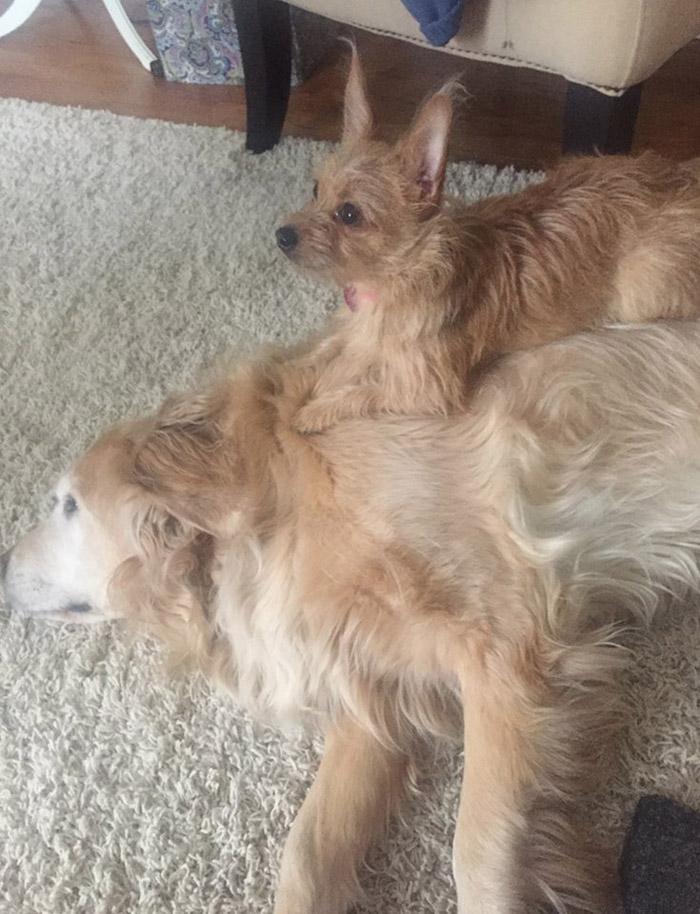 Son los mejores amigos
