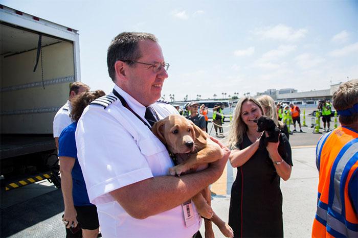 Cachorro rescatado