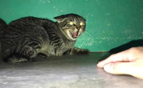Gato medroso