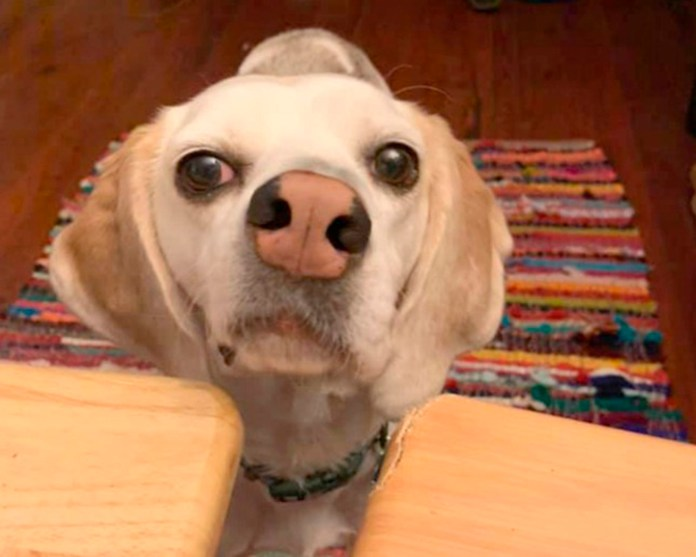Jude con nariz torcida