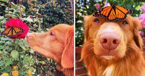 Este gentil perro es amigo de todas las mariposas en su jardín