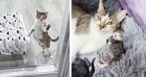 Gata visita a una vecina que fue amable con ella, para que sus gatitos puedan vivir una vida mejor