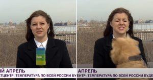 Perro juguetón roba micrófono de reportera