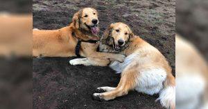 Perro ve a otro perro en el parque para perros y lo reconoce de inmediato