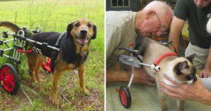 Veterinario jubilado 92 años fabrica sillas ruedas perros