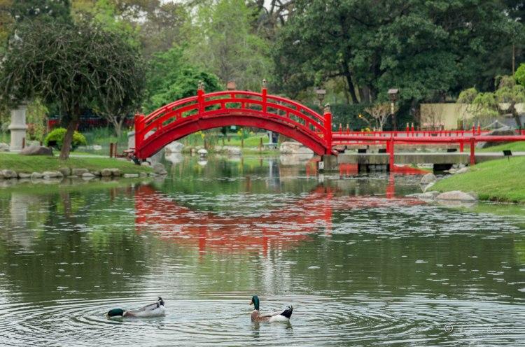 Jardín Japonés. Buenos Aires. Argentina 2017.