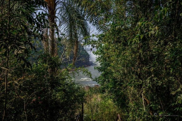 Selva. Parque Nacional del Iguazú. Argentina 2017.