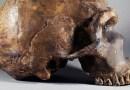 Los neandertales podían escuchar y hacer los mismos sonidos que los humanos, sugiere una nueva investigación