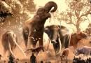 Los elefantes modernos sobrevivieron al cambio climático en el pasado. Más de 180 especies, incluidos los mastodontes, no lo lograron