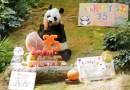 El panda de zoológico más longevo del mundo cumple 35 años