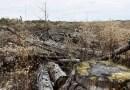 """El bosque de la """"Bella Durmiente"""" se está muriendo. No es la única crisis climática a la que se enfrentará el próximo canciller de Alemania"""