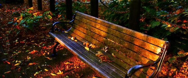 fall-scene-and-the-bench-in-the-park-susanne-van-hulst