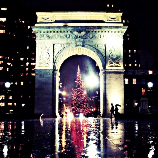 washington-square-park-nyc-tree
