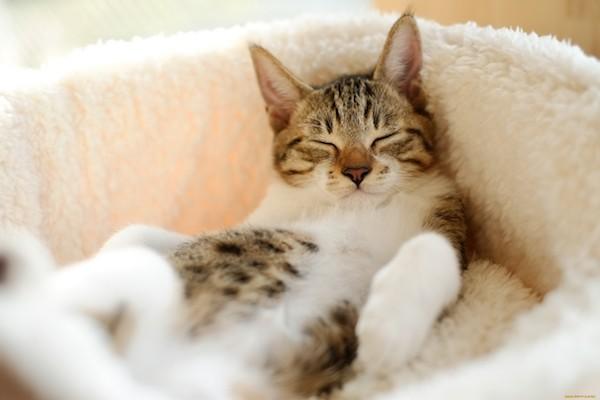 www-getbg_-net_animals___cats__038251_