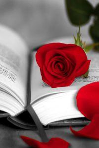 el libro y la rosa