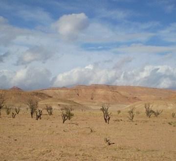 Frente Polisario confía en aporte de Rusia a solución del conflicto en Sáhara Occidental – Diario Digital Nuestro País