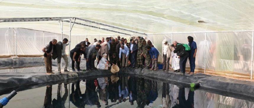 Algérie : un projet pilote de pisciculture dans un camp de réfugiés sahraouis – Le Journal International