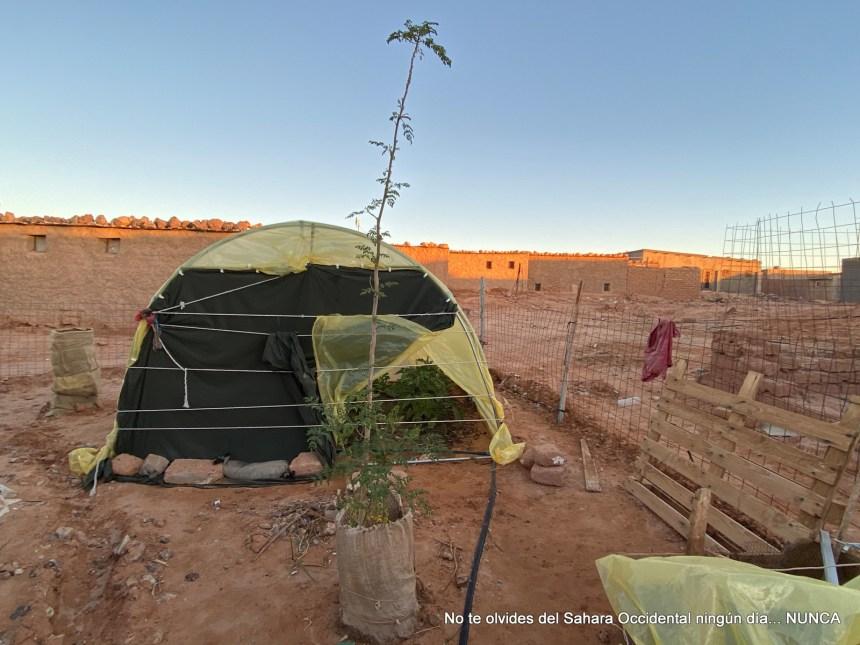La Actualidad Saharaui: 9 de enero de 2020 🇪🇭
