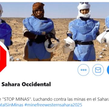 Stop Minas Sahara Occidental: 23ª reunión internacional de directores nacionales en acción contra las minas y asesores de la ONU en Ginebra