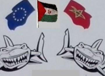 El Observatorio de Recursos del Sáhara Occidental pide un compromiso de mayor sostenibilidad a la industria de la acuicultura – El Faradio