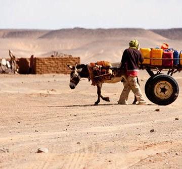Suiza dona 1,8 millones de francos suizos al PMA para los refugiados saharauis