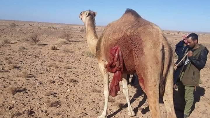 El ejército marroquí continúa abriendo fuego contra los nómadas saharauis al otro lado del muro de la vergüenza