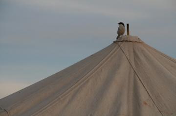 La Actualidad Saharaui: 26 de mayo de 2020 🇪🇭