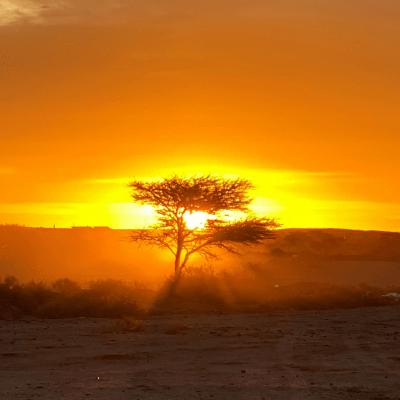 La Actualidad Saharaui: 24 de mayo de 2020 (fin de jornada) 🇪🇭