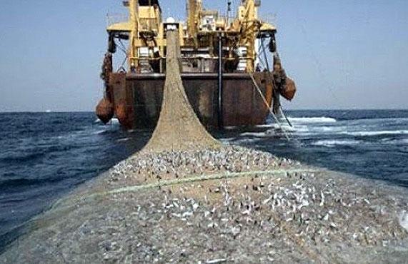 Accord de pêche Maroc – UE : «Bruxelles n'œuvre pas pour la paix et la stabilité au Sahara occidental» |elmoudjahid