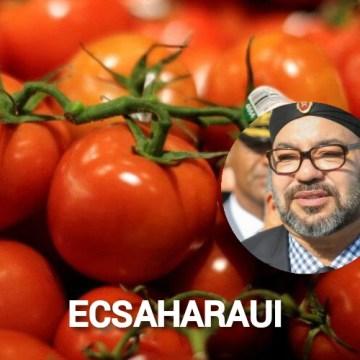 """COAG denuncia la construcción por parte del rey de Marruecos de la """"megalópolis del tomate"""" en el Sáhara Occidental ocupado"""