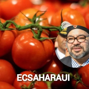 La Unión Europea declina investigar sobre el tomate saharaui etiquetado como marroquí