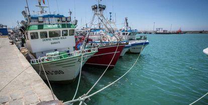 El Frente Polisario cree que el Tribunal General de la UE puede anular este miércoles los acuerdos de libre comercio y de pesca entre Rabat y Bruselas | EL PAÍS