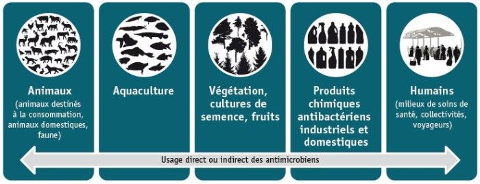 Source : Agency de la santé publique du Canada, «Rapport de l'administrateur en chef de la santé publique sur l'état de la santé publique au Canada, 2013 : Les maladies infectieuses — Une menace perpétuelle», 2013.