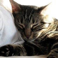 What Your Cat Wants You to Know: An American Ex-pat Perspective