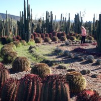 Cactus labyrinth