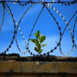Solitary Confinement, Race & Education, Books for Consciousness Raising: 5 Articles I've Been Reading This Week