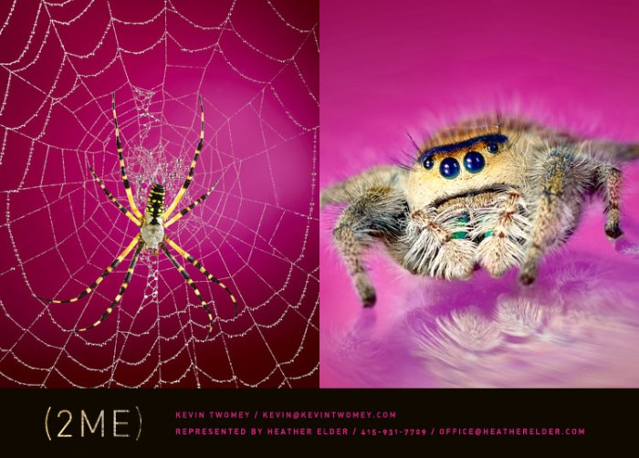 2_spiders