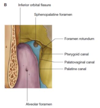 Read more about the article Pterygopalatine fossa: Boundaries, Communication, Contents