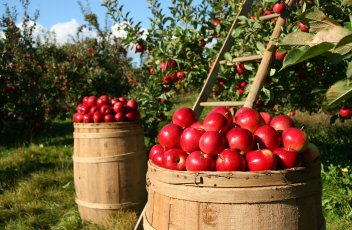 orchard-1872997_1920