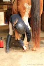 Horse photography by Notes Of Light, Atlanta