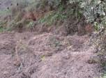 freshly dug earth beneath tree5 11-2-15