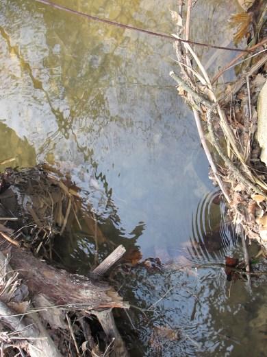 juan's bridge - looking upstream1 11-2-15 (2)