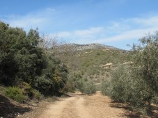 track at other side of valley, looking towards Juan's 11-2-15